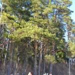 Metsaomanikud tutvusid Tartumaa pühapaikadega