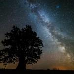 Rahvusvahelise hiite fotovõistluse võitis lummav pilt Tamme-Lauri tammest ja Linnuteest